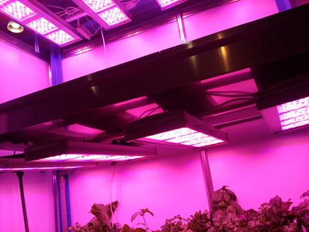 Светильники AtomSvet® BIO на выставке «Импортозамещение»