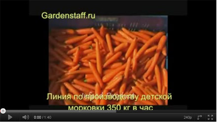 Морковные палочки и Бэби Кэрот (Baby Carrot)