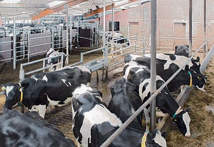 Обзор молочной промышленности ЮФО РФ по итогам 1 квартала