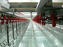 Оборудование для птицефабрик