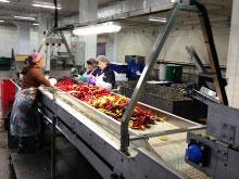 Линия мойки и инспекции овощей для ООО «Дмитровское разносолы»