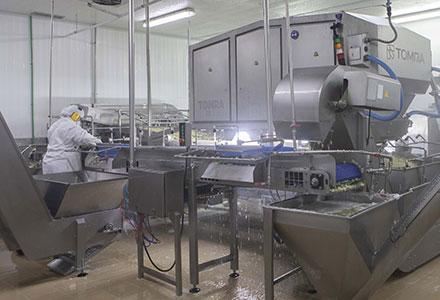 Компания BS Cocinados, S.L. использует новую высокопроизводительную установку TOMRA 5B для сортировки овощей, картофеля и фруктов
