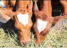 Итоги аграрного года подведет конгресс «ЮГАГРО»